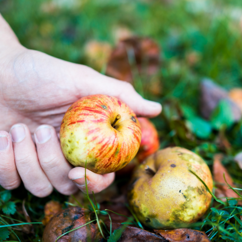 No Taste for Waste How Gleaning Helps Fight Food Waste